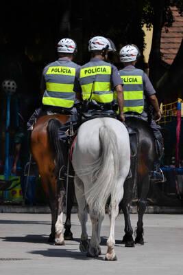 Os cavalos da PM possuem uma alimentação de ótima qualidade e totalmente controlada. Foto: Divulgação/Polícia Militar