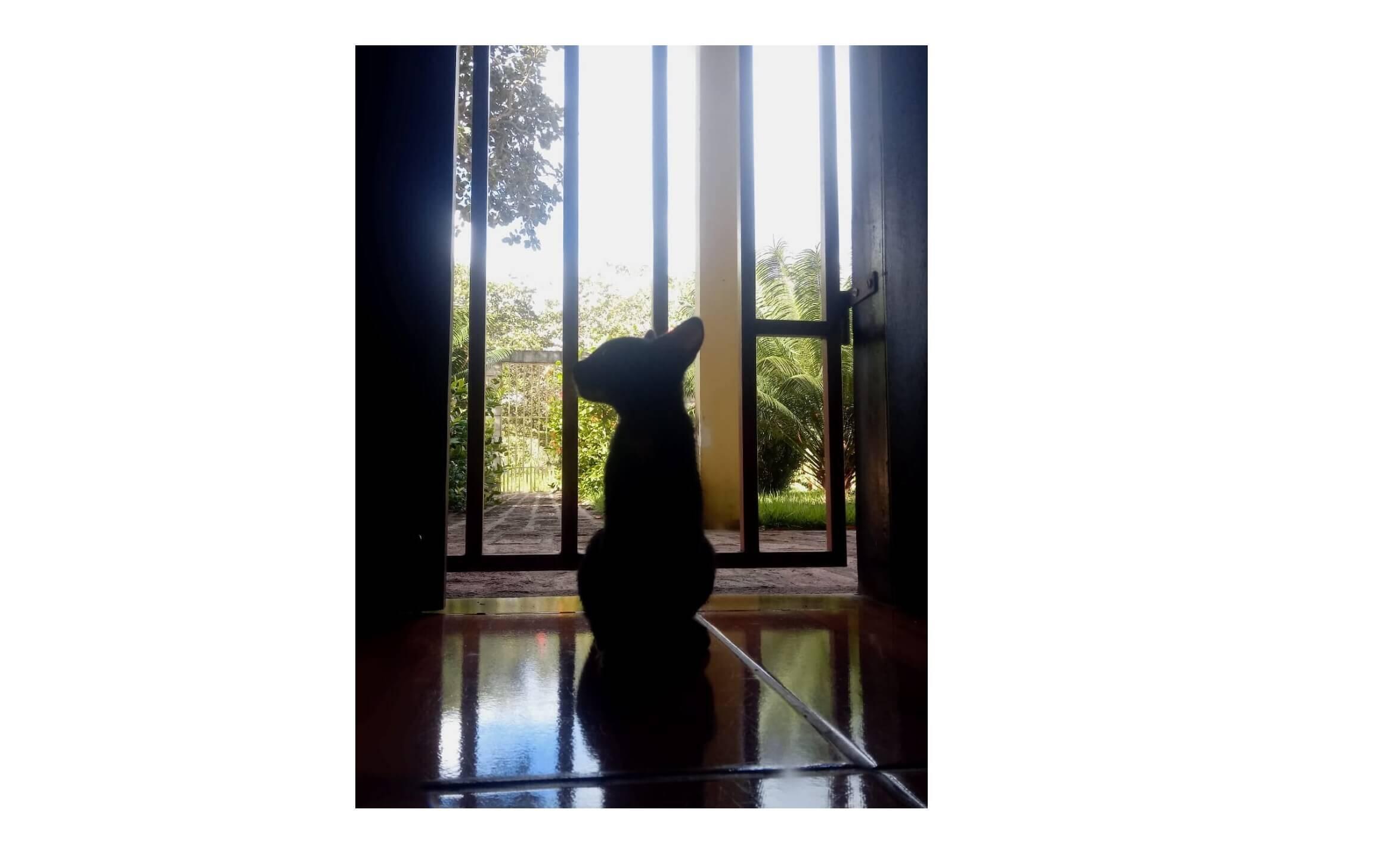Minha gatinha olhando pro horizonte, por Gabriela Fonteles de Sousa. Foto: Gabriela Fonteles de Sousa