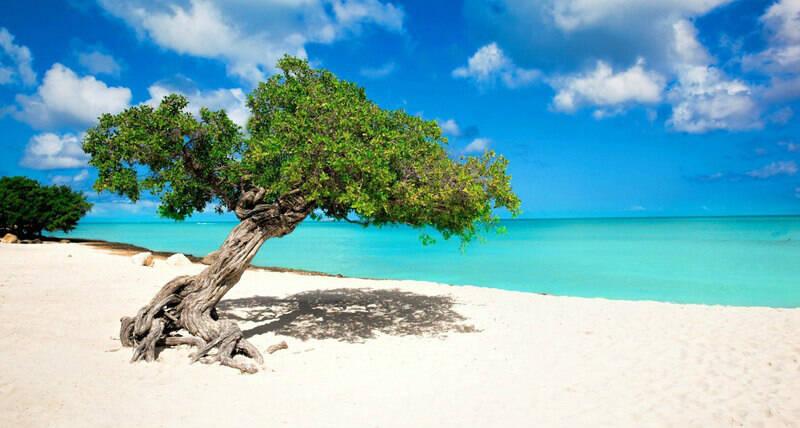 Diversas espécies de árvores estão espalhadas pela região de Eagle Beach. Foto: Brasil Travel News