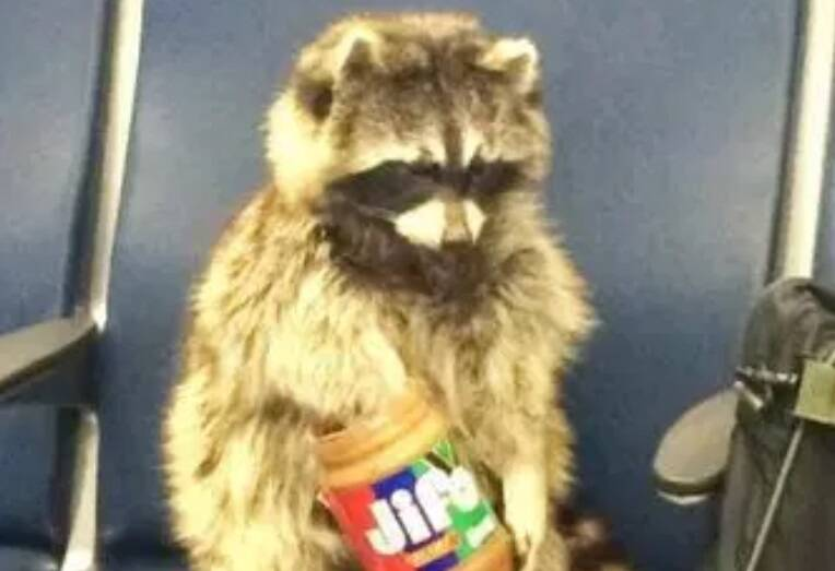 E se você visse um animal comendo no aeroporto? O que faria?. Foto: Reprodução/Internet