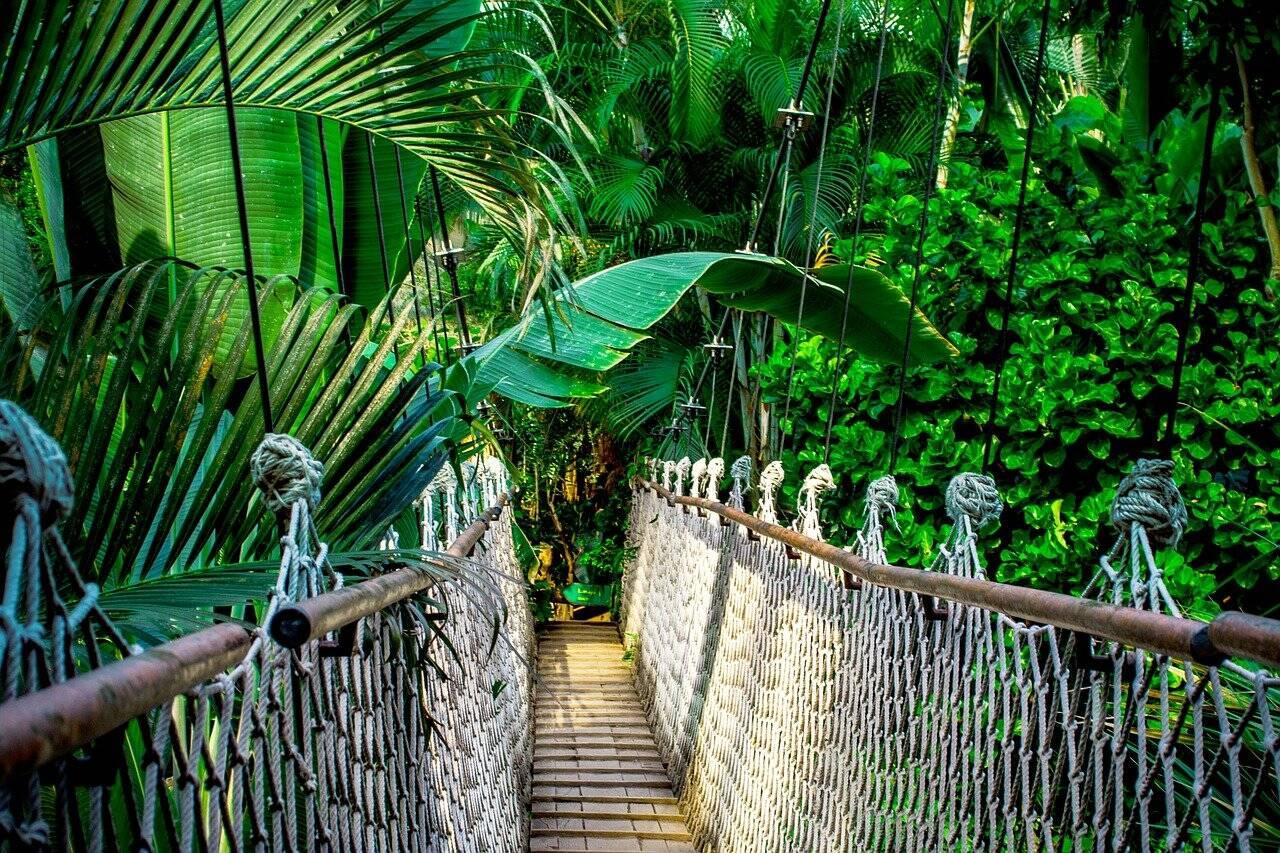 Ponte suspensa sobre a floresta amazônica. Foto: Pixabay