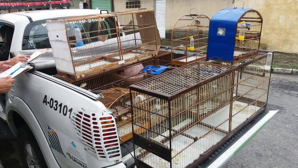 80 animais nativos foram recuperados pelos policiais durante a Operação Bem-Ti-Vi na Praia Grande. Foto: Divulgação/Polícia Ambiental