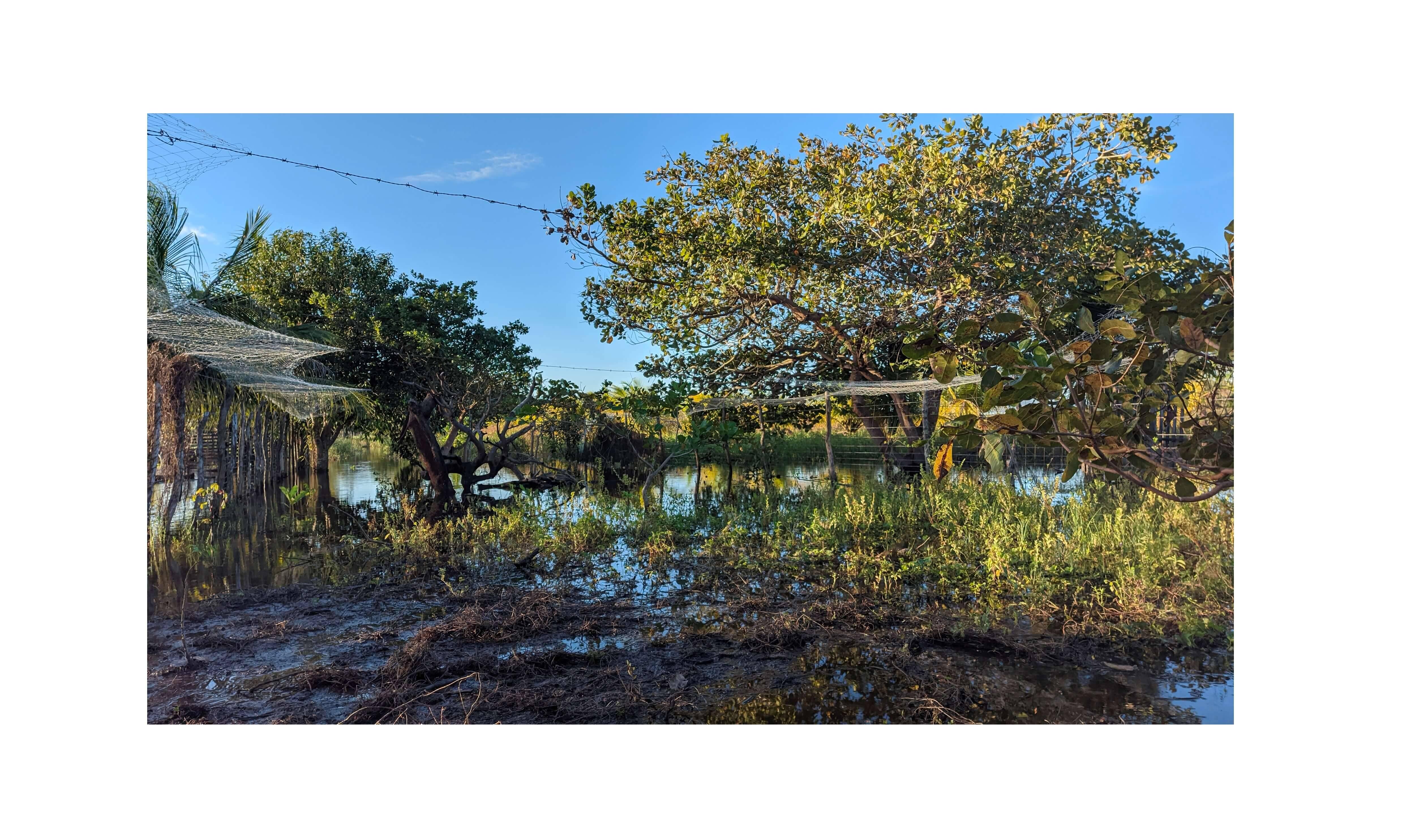 Paraíso no quintal, por Matheus Henrique Barros Ferreira. Foto: Matheus Henrique Barros Ferreira