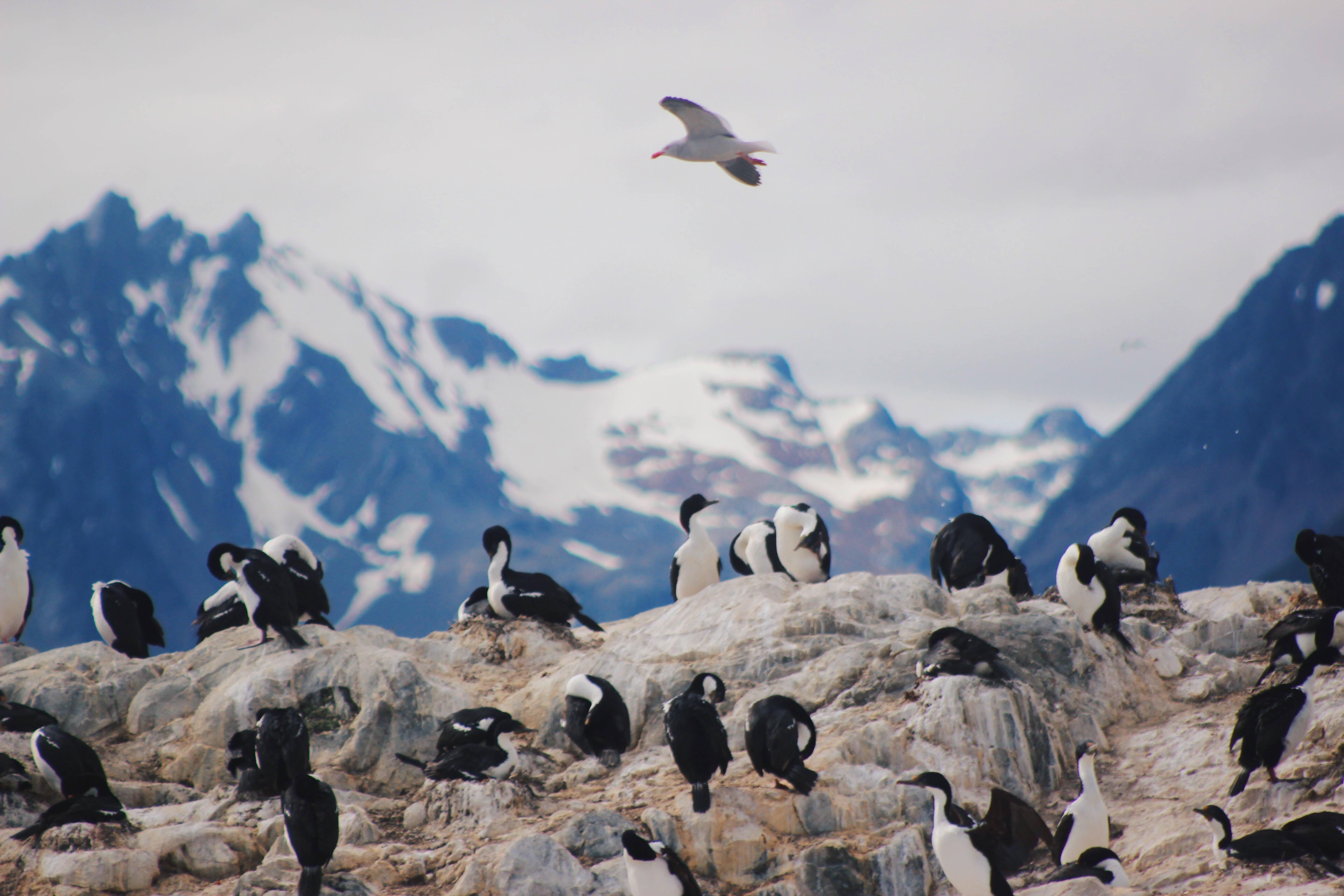 A fauna de Ushuaia é repleta de aves aquáticas, desde gaivotas e albatrozes até pinguins e gansos. Foto: shutterstock