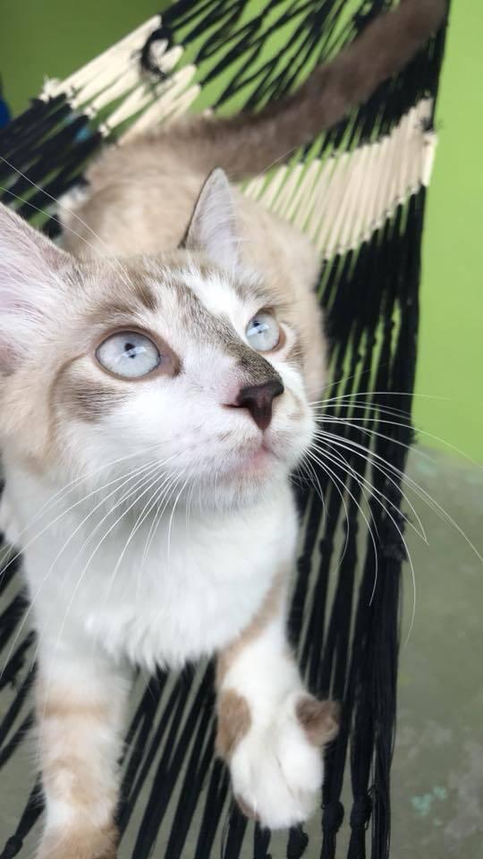Miu é uma gatinha muito linda!. Foto: Sandra Lopes