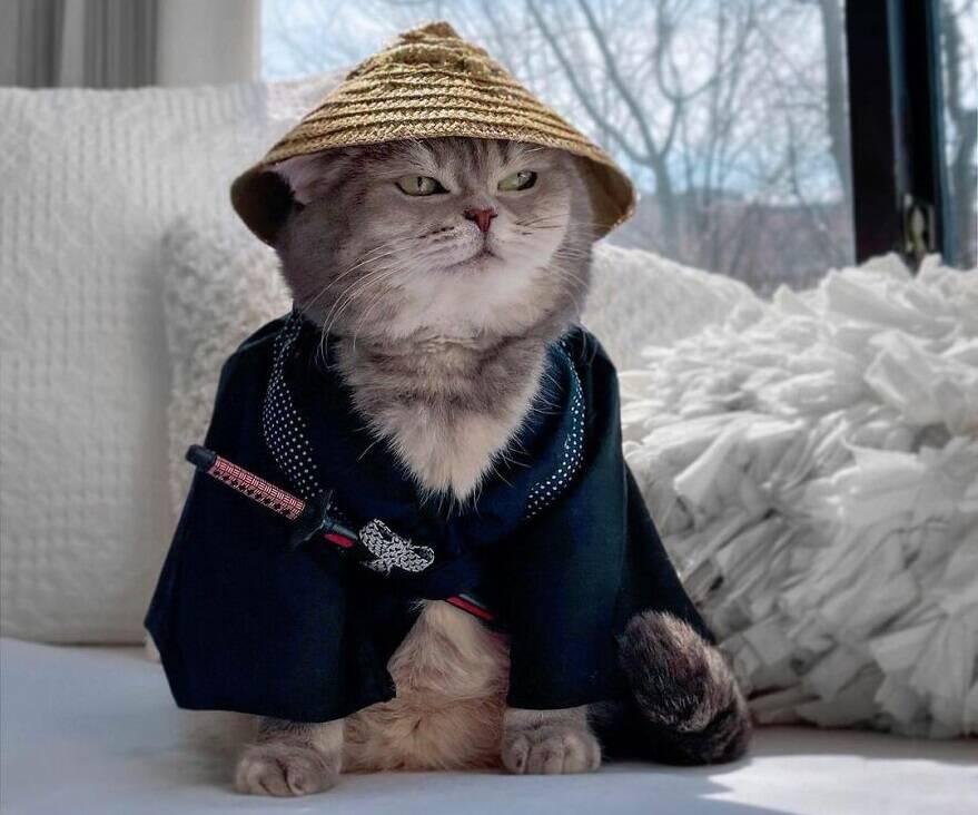 Gato abandonado encontra uma nova casa e se torna uma sensação no Instagram com suas roupas fofas . Foto: @a_street_cat_named_benson