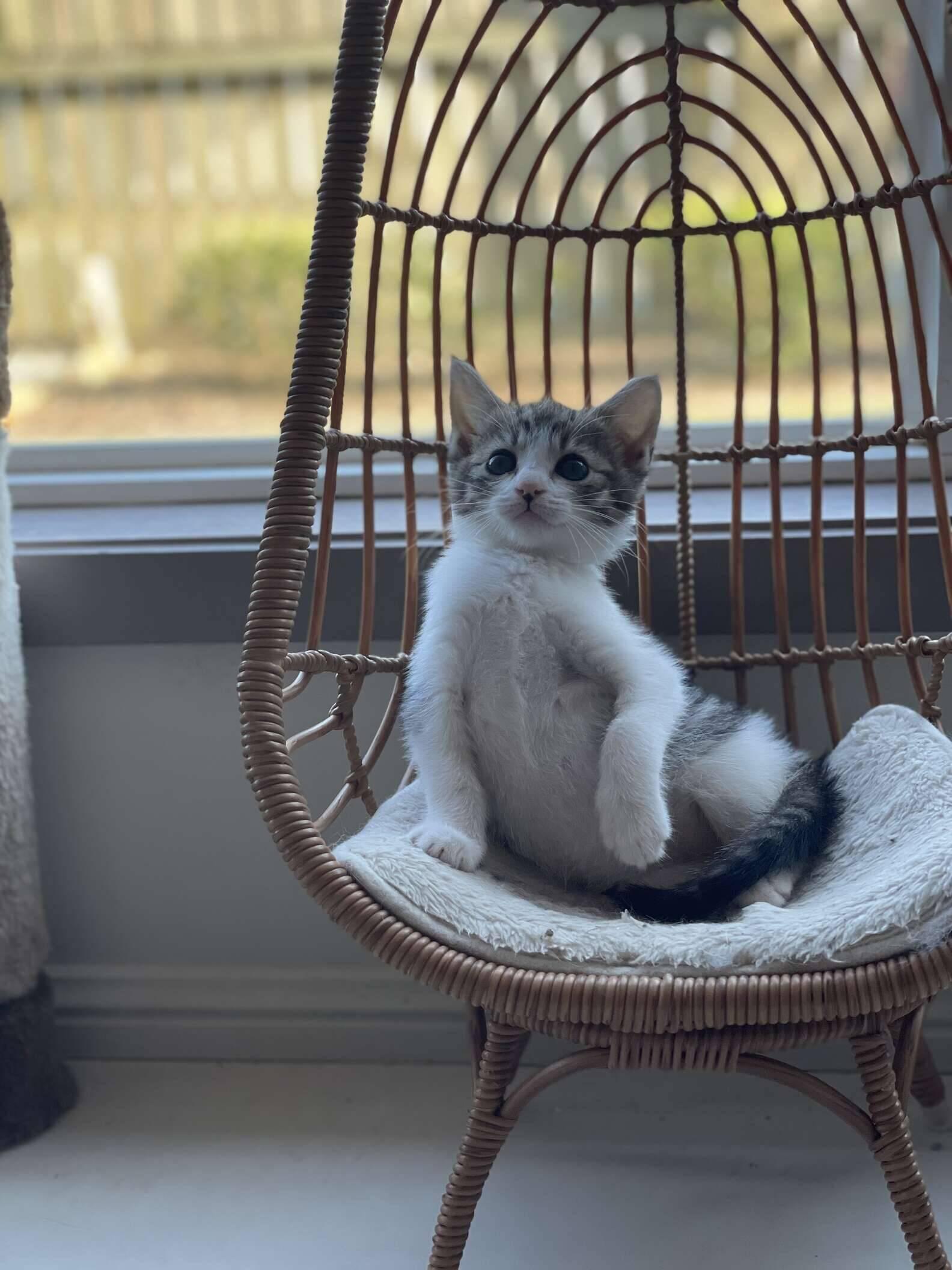 Namaari posando para um calendário de gatinhos. Foto: Jen Davis