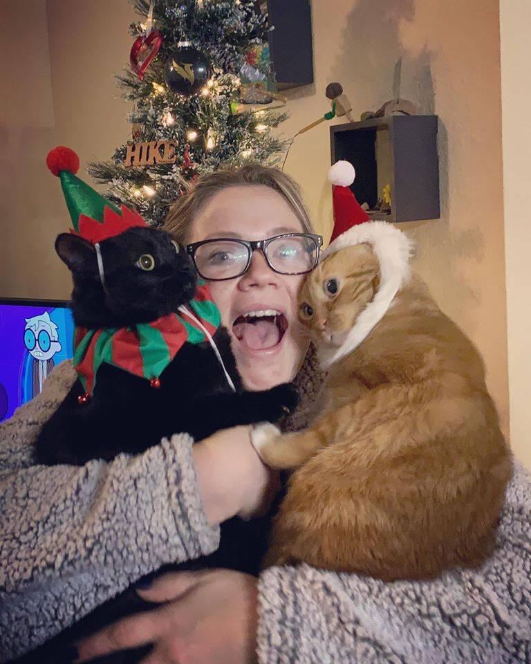 Gatos nada natalinos . Foto: Facebook. Kate Beier