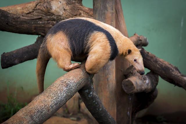 Parque Zoológico de São Paulo. Foto: Reprodução/Flickr/Deni Williams