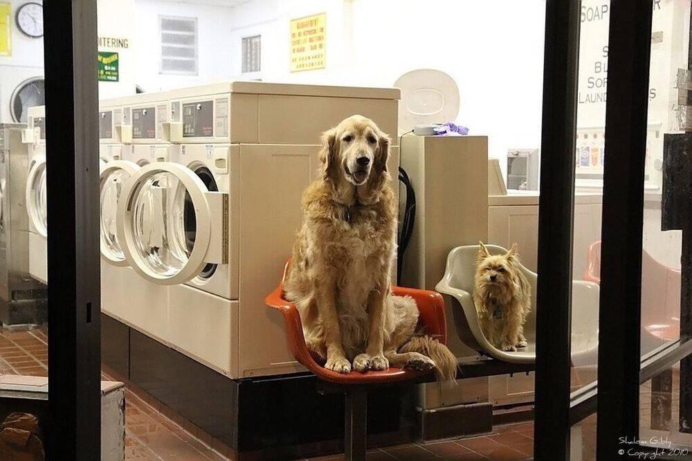 No site de avaliação dos clientes já mais fotos de Cody do que das máquinas de lavar. Foto: Reprodução/ Larkin Street Laundromat