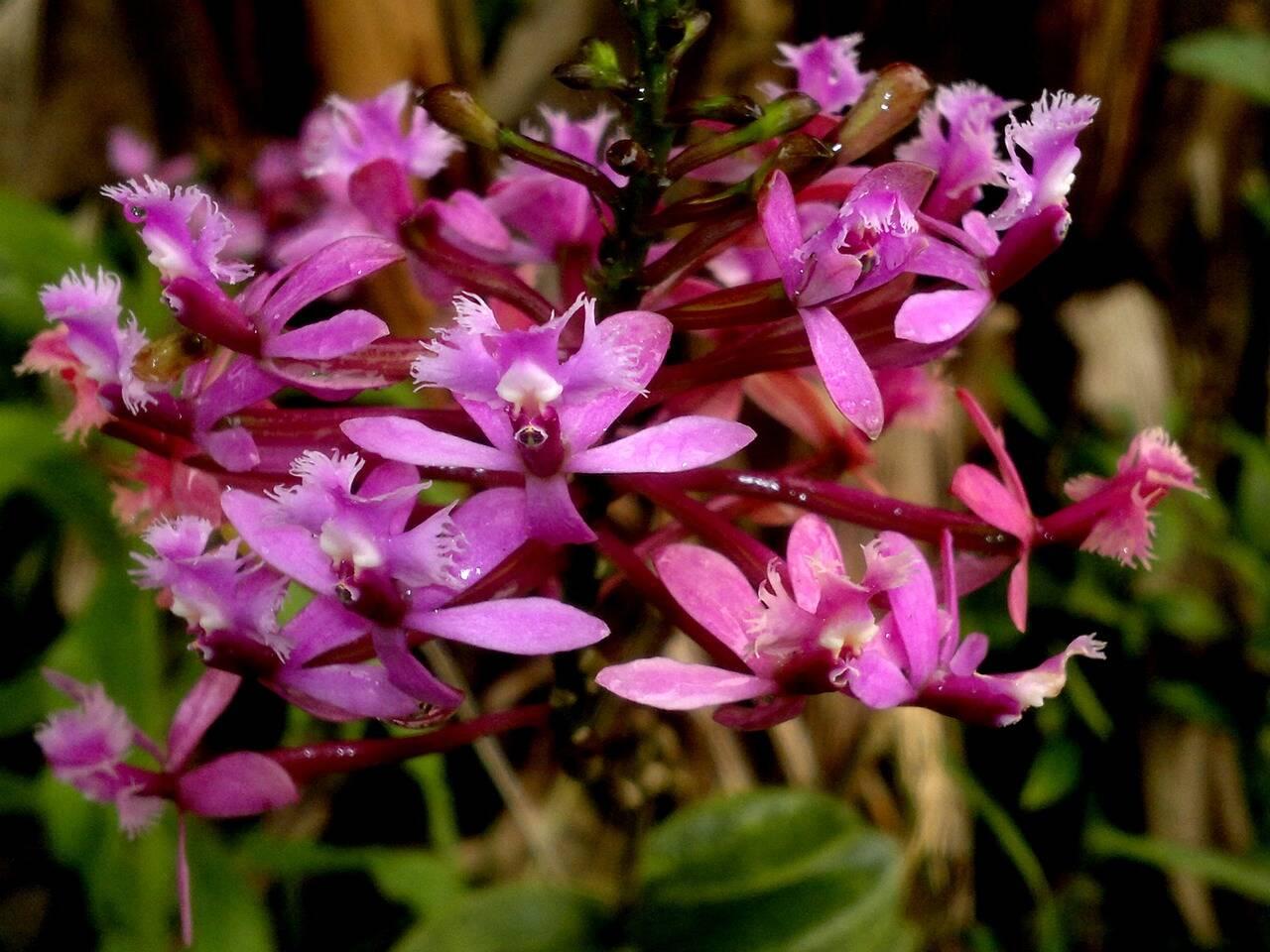 As orquídeas nascem em meio à floresta amazônica. Foto: Pixabay