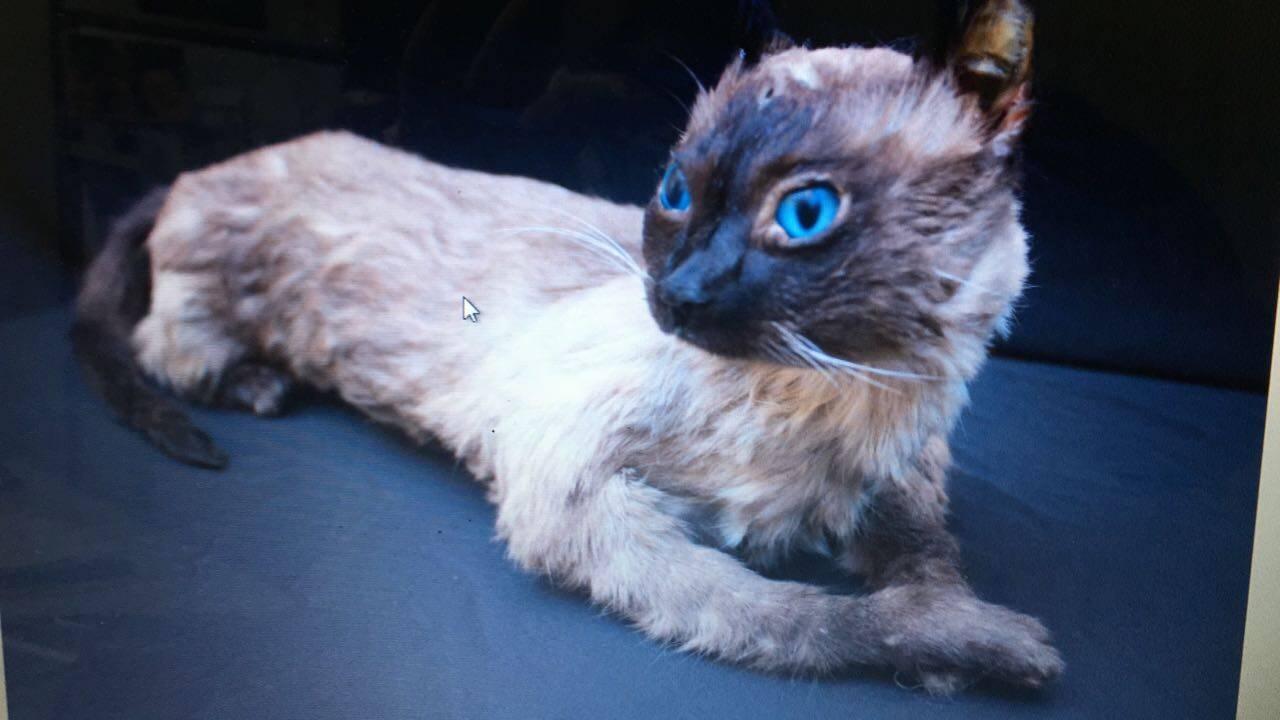 Um gatinho que foi taxidermizado. Foto: Reprodução/SOS Animal