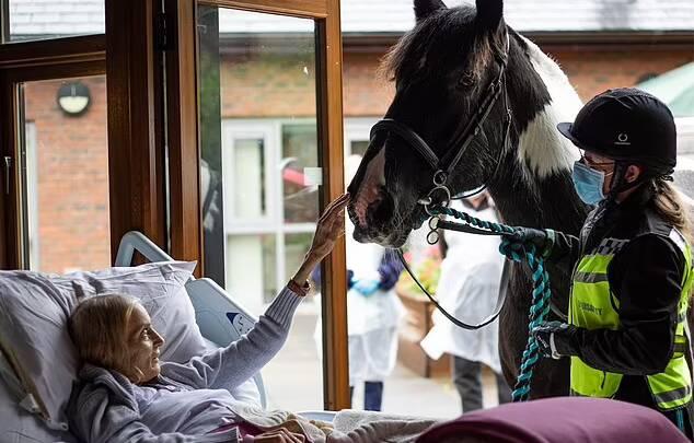 Jan Holman, 68, acaricia Bob, seu cavalo, em seu leito de morte. Foto: Hospice of the Good Shepherd/MEN