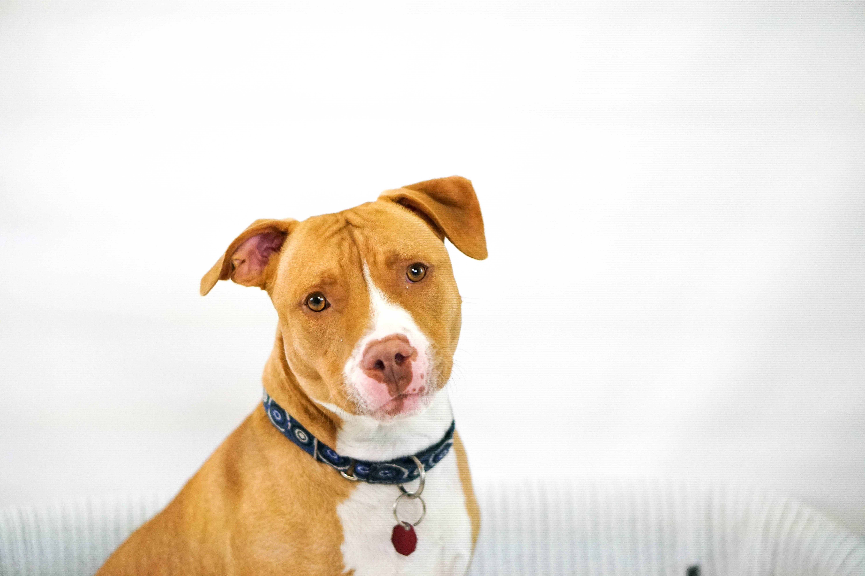 Cortar orelhas ou cauda de cães por padrões estéticos é considerado crime. Foto: Unsplash/Shelley Kim