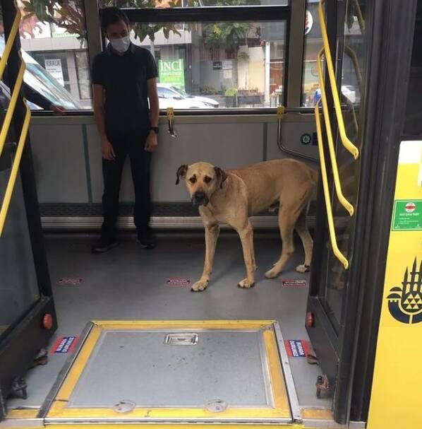 Ele também sabe andar de ônibus. Foto: Reprodução/Instagram/boji_ist