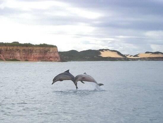 É normal que golfinhos apareçam para dançar para os turistas. Foto: TripAdvisor