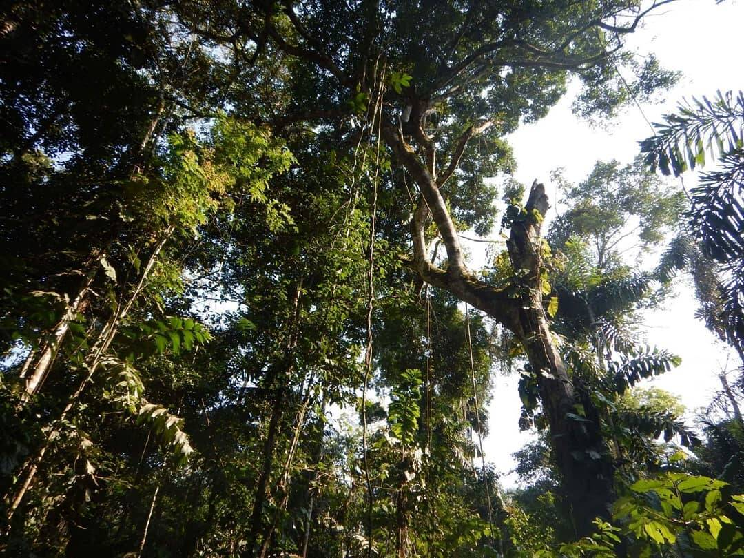 Floresta amazônica. Foto: Pixabay