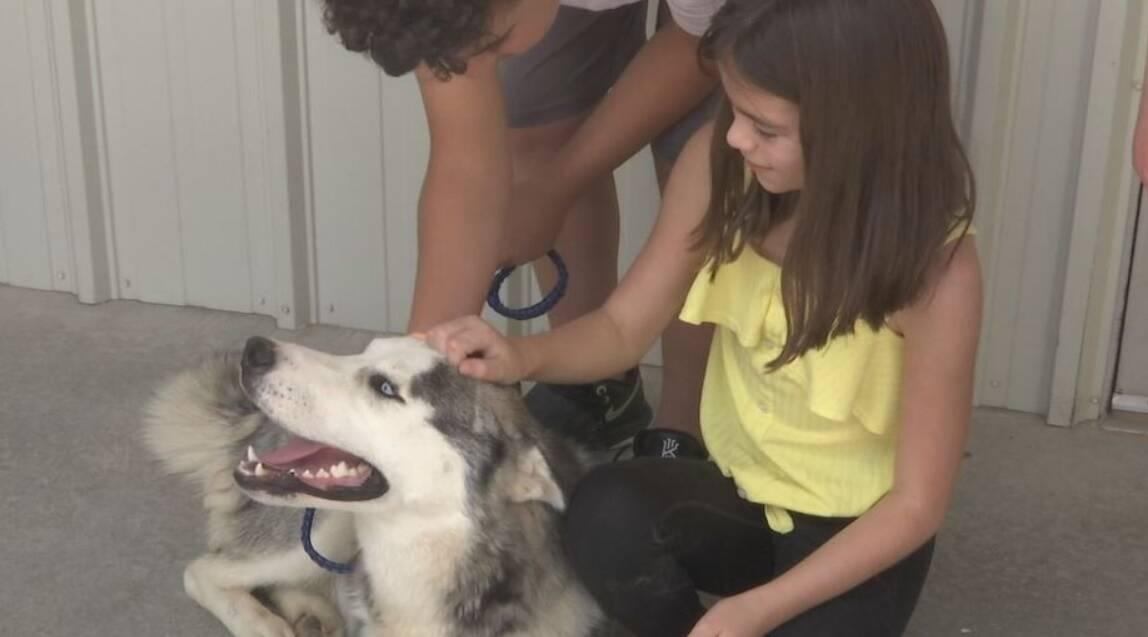 Cachorro abandonado na beira da estrada foi adotado por uma nova família. Foto: Reprodução/KFOX14/CBS4