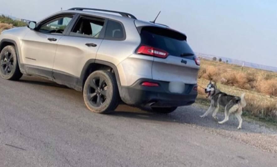 Cachorro é abandonado em estrada deserta. Foto: Reprodução