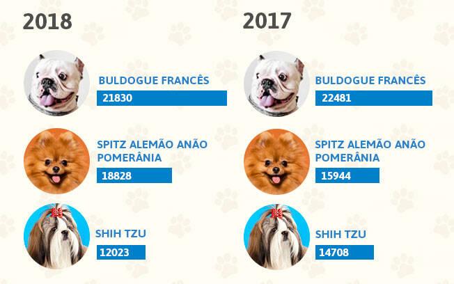 As raças de cachorro mais populares dos anos 2018 e 2017. Foto: Shayene Mazzoti/ Portal IG