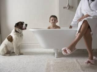 Os cães são tão sociáveis quanto nós, mas possuem uma forma distinta de comunicação