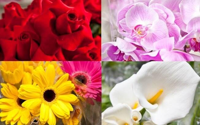 Flores para todas as estações