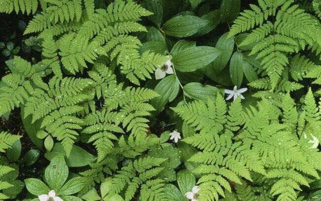 Flores Para Jardineiras Jardinagem Ig