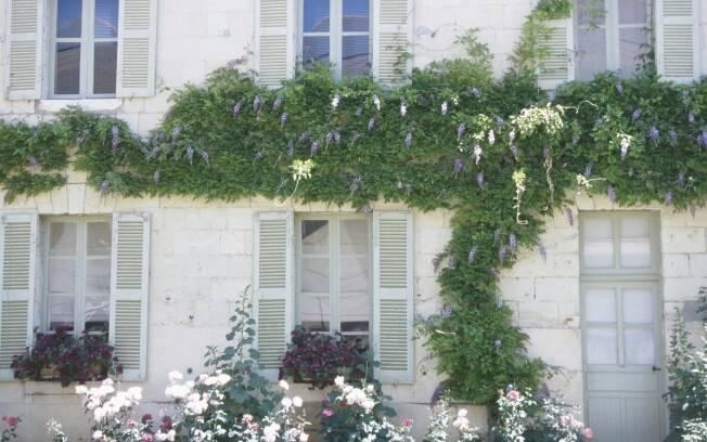 Flores em casa o ano todo  Jardinagem  iG