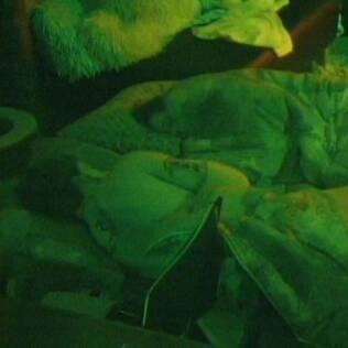 Rodrigo e Talula dormem na mesma cama, mas não ficam abraçadinhos
