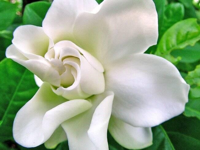 flores no jardim letra:Jardim no frio – Jardinagem – iG