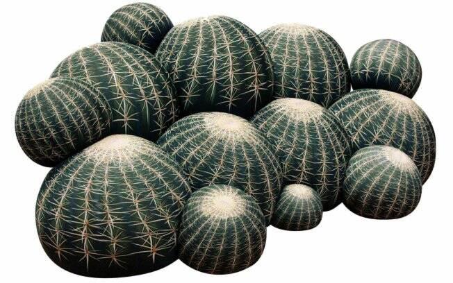 Os pufes Canape Cactus apesar de imitarem cactos são bastante macios