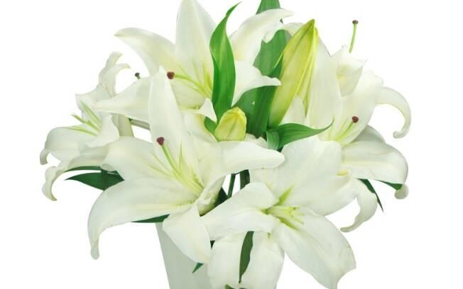 O lírio é uma das cinco flores mais vendidas nos Estados Unidos