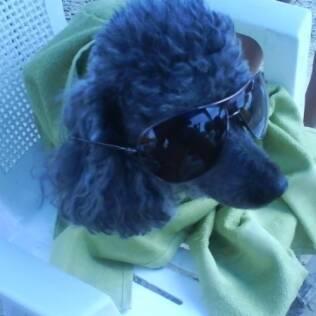 O cãozinho Bob Marley, que continua sendo lembrado pela família mesmo depois de sua morte