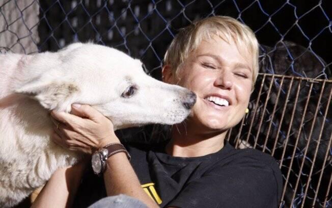 Xuxa é madrinha de campanha para adotar cães abandonados