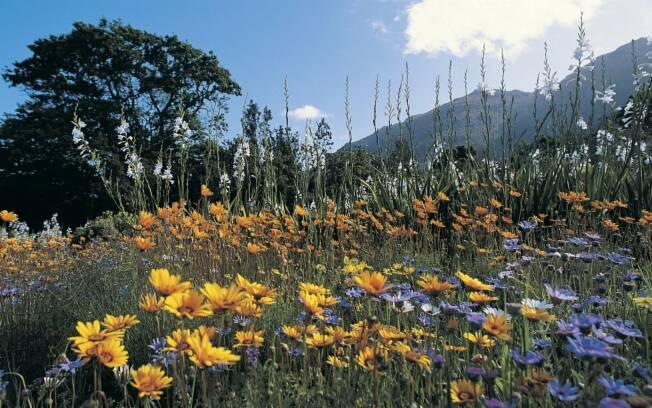 O Kirstenbosch Botanical Garden, na África do Sul, conta apenas com espécies nativas