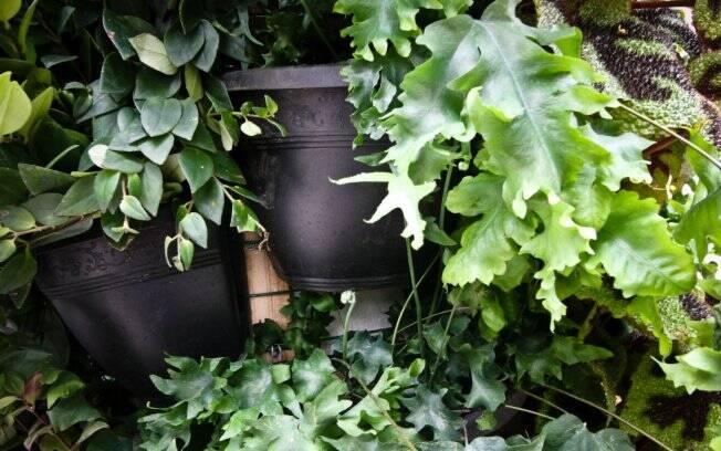 Jardins Verticais Em Destaque – Jardinagem – IG~ Jardins Verticais Orquideas