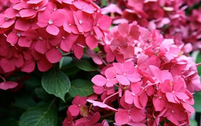 Diversos fatores levaram ao aumento da venda de flores nos últimos anos