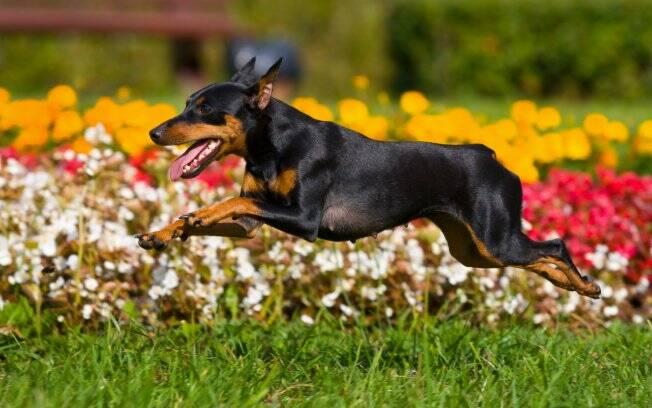 Corra como ele, ou com ele. Cachorros podem ser um aliado na atividade física