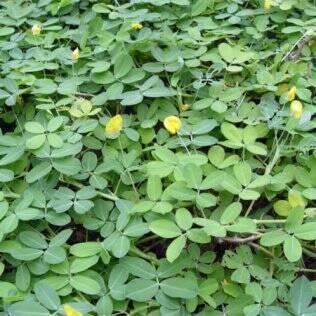A manutenção das plantas de forração em geral é similar à da grama