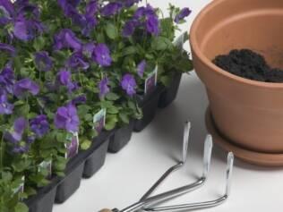 Mantenha as violetas próximas às janelas mas evite a incidência direta da luz solar