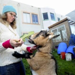 Comendo na mão da dona Heidi Kooy