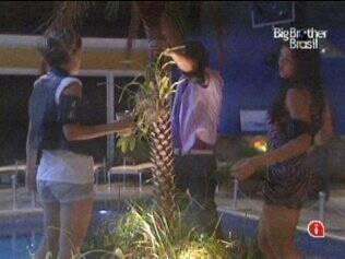Trio dança em volta do coqueiro