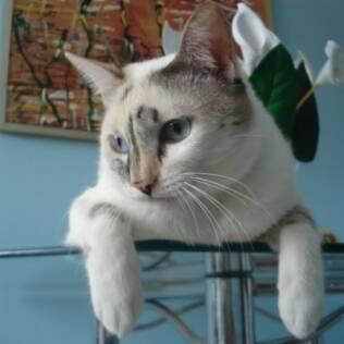 Lili tem blog, perfil em diversas redes sociais e mais de cinco mil seguidores