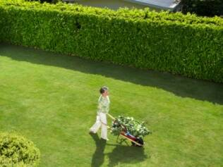Muros verdes enriquecem o jardim e podem embelezar superfícies danificadas