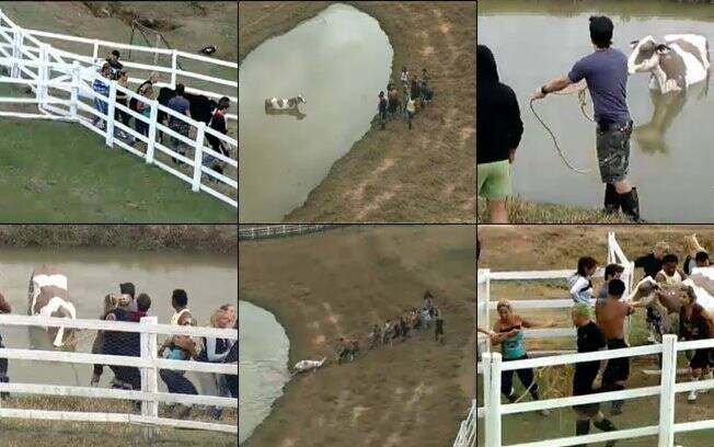 Fazendeiros discutiram a melhor estratégia e tiraram a vaca do lago