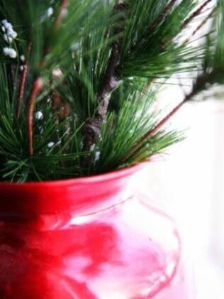 Espécies que necessitam de pouca rega são ideais para quem não tempo de cuidar das plantas