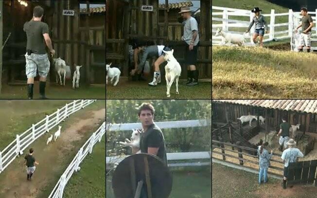 Thiago Gagliasso também suou a camisa ao cuidar dos animais