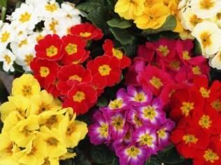 Para as plantas crescerem com vigor na primavera, é preciso tomar alguns cuidados