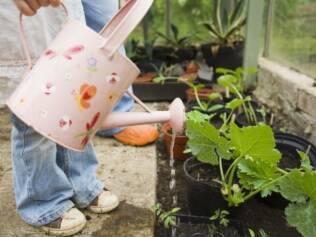 O ideal é irrigar a muda todos os dias, por duas a três semanas