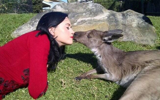 Katy Perry com cangurus na nova Zelândia